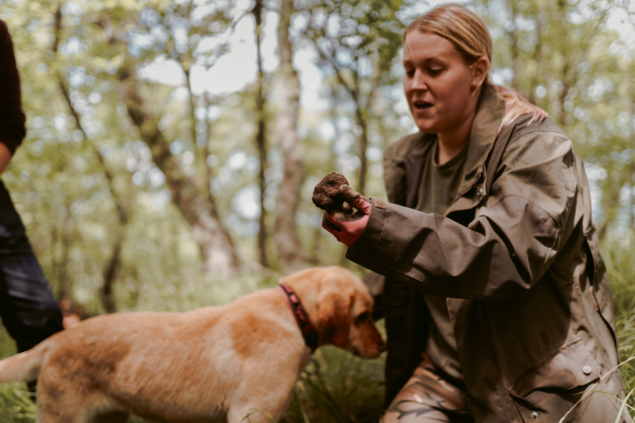 Woman digging for truffles with dog